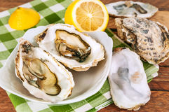 Fresh opened oysters. With lemon juice Royalty Free Stock Images