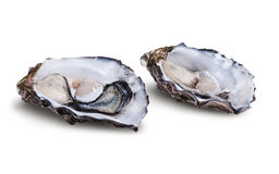 Fresh opened oysters Royalty Free Stock Photography