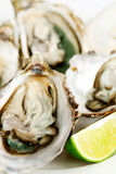 Fresh opened oysters. On the plate with lime Stock Images