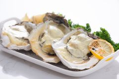 Fresh opened oysters on a white plate. Selective focus.  Royalty Free Stock Photography