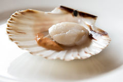 Fresh opened scallop. On white dish Stock Photo