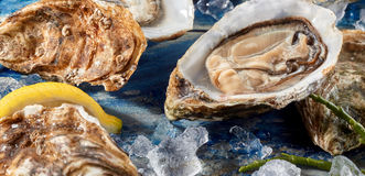 Fresh opened uncooked marine oyster Royalty Free Stock Photography
