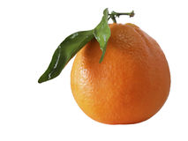 Fresh Orange. Isolated in white background Royalty Free Stock Image