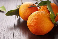 Fresh orange. Fresh sweet italian orange from the tree Stock Photography