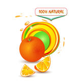 Fresh orange vector illustration