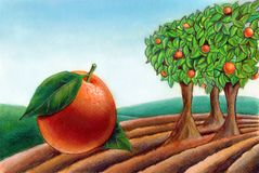 Fresh orange. A fresh orange. From the cultivation. Hand drawn illustration Royalty Free Stock Photo