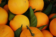 Fresh orange background Stock Images