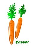 Fresh orange cartoon carrots vegetables Royalty Free Stock Image