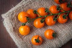 Fresh orange cherry tomatoes Royalty Free Stock Photos