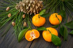 Fresh orange clementine tangerines with conifer needle branch an. D fir-cone on dark wooden background, New year decoration royalty free stock photography