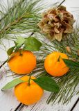 Fresh orange clementine tangerines with conifer needle branch an. D fir-cone on white wooden background, Christmas decoration stock images