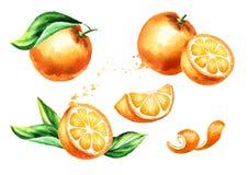 Fresh Orange  fruit compositions set. Watercolor hand drawn illustration,  on white background.  Stock Photos