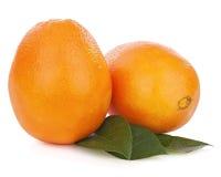 Fresh orange fruit with green leaves isolated on white backgroun Stock Photos