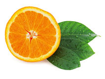 Fresh orange fruit with green leaves isolated on white. Royalty Free Stock Images