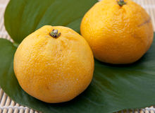 Fresh orange fruit Stock Photos