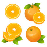 Fresh orange fruit slice set. Collection of realistic citrus vector illustrations. Juicy orange with leaves  Royalty Free Stock Image