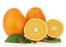 Fresh orange fruits with green leaves isolated on white backgrou Stock Photo