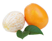 Fresh orange fruits with green leaves isolated on white backgrou Stock Photos