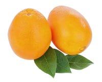 Fresh orange fruits with green leaves isolated on white backgrou Stock Image