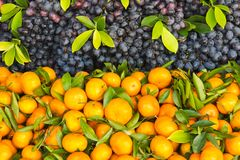 Fresh orange and grape fruit Royalty Free Stock Image