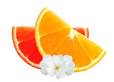 Fresh orange and grapefruit slices and flowers isolated on white Royalty Free Stock Photos