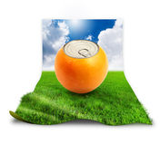 Fresh orange on grass. Royalty Free Stock Images