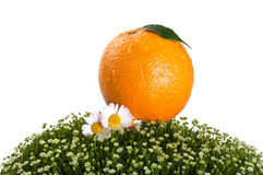 Fresh orange on green grass Royalty Free Stock Photos
