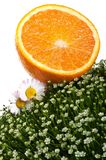 Fresh orange on green grass Stock Photography