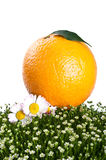 Fresh orange isolated on a white background Royalty Free Stock Photos