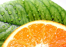 Fresh orange and leave with drops macro Stock Photos