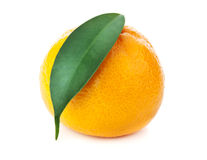 Fresh orange mandarin Royalty Free Stock Photos