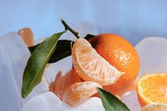 Fresh orange mandarin fruit with green leaves are frozen on cold blue ice. Royalty Free Stock Images