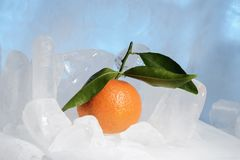 Fresh orange mandarin fruit with green leaves are frozen on cold blue ice. Royalty Free Stock Photos