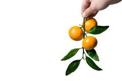 Fresh orange mandarine with leaf isolated on white background Royalty Free Stock Images