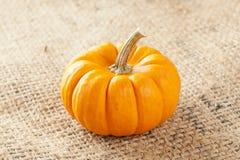 Fresh Orange Organic Pumpkin Stock Photography