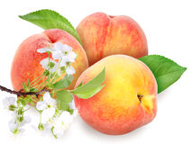 Fresh orange peaches with green leaf Stock Photography