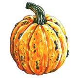 Fresh orange pumpkin, autumn harvest, closeup isolated, hand drawn watercolor illustration on white background Royalty Free Illustration