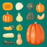 Fresh orange pumpkin decorative seasonal ripe food organic healthy vegetarian vegetable vector. Fresh orange pumpkin decorative seasonal ripe food organic Stock Image