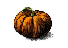 Fresh orange pumpkin Stock Images