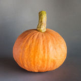 Fresh orange pumpkin on gray Royalty Free Stock Image