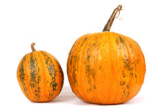 Fresh orange pumpkin Royalty Free Stock Images