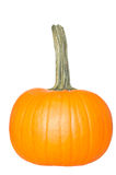 Fresh orange pumpkin Stock Photography