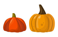 Fresh orange pumpkin vegetable isolated vector illustration. Royalty Free Stock Images