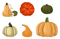 Fresh orange pumpkin vegetable isolated vector illustration. Royalty Free Stock Photography
