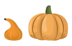 Fresh orange pumpkin vegetable isolated vector illustration. Royalty Free Stock Photo