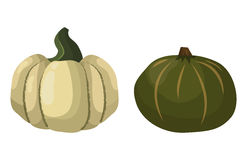 Fresh orange pumpkin vegetable  vector illustration. Stock Photography