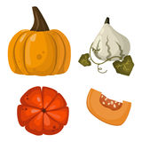 Fresh orange pumpkin vegetable  vector illustration. Royalty Free Stock Image