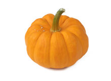Fresh orange pumpkin Royalty Free Stock Photography