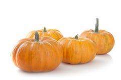 Fresh orange pumpkins Stock Image