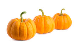 Fresh orange pumpkins Stock Image